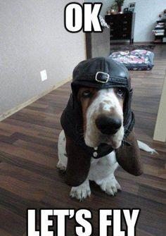 Hound dog flights