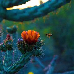 Beauty and the Bee at sunset in Tucson, Arizona http://www.visittucson.org/about/ (Photo via Instagram By @kaseberg15)