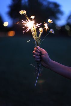 http://meriamber.tumblr.com/ flowers bunch fire crackers night love cute