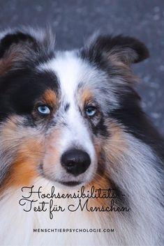 Coaching für Mensch & Hund in Klagenfurt, Hochsensibilität, Stressmanagement und mehr