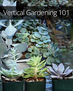 Learn to plant a vertical garden with Sunset Magazine's garden guru.