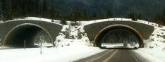 Alberta & BC Rockies Visitor Tips Banff Alberta, Winter Things, Banff National Park, Bridge, Tips, Travel, Outdoor, Animals, Outdoors