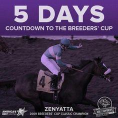 Zenyatta Breeders Cup Champion 2009!!!!!!!