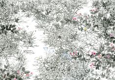 須藤由希子 Underbush in Chiang Mai チェンマイの下草 2009 Pencil and colored pencil on paper 25.1 x 36.4 cm