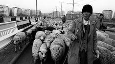 Bucureștiul din anii 90, când oile se plimbau libere pe Podul Grant - VICE