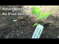 Grow Food Eliminate Hunger with AmpleHarvest.org.  Watch and share this video to let people know about how to donate food and enter for a chance to win $300 from Gardener's Supply Company.