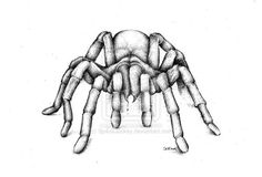 Hey, I found this really awesome Etsy listing at https://www.etsy.com/uk/listing/124905558/king-baboon-tarantula-pencil-drawing
