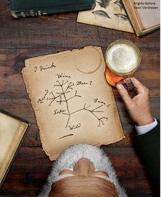 Here It Is the Genetic Family Tree of Beer #beer #craftbeer #party #beerporn #instabeer #beerstagram #beergeek #beergasm #drinklocal #beertography