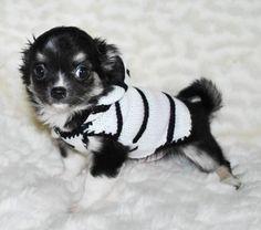 Chihuahua Clothes, Puppy Clothes, Chihuahua Dogs, Chihuahuas, Teacup Chihuahua, Corgi Puppies, Small Dog Toys, Small Dog Clothes, Small Dogs