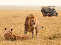 Go experience the wilds of Kenya!