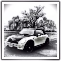 My Mr. Bean Mini Cooper in Black and white by a beautiful tree