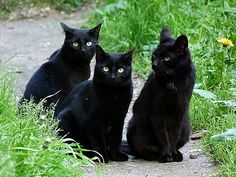 I told you two to stay behind me so they think its just ONE black cat!
