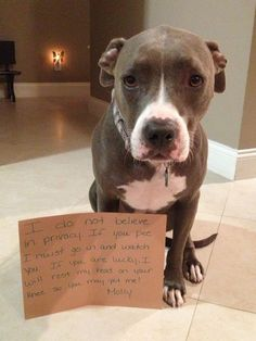 """I do not believe in privacy. If you pee I must go and watch you. If you are lucky, I will rest my head on your knee so you may pet me…Molly"" ~ Dog Shaming shame - Pit Bull - Miss You!"