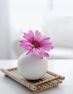 Pink daisy in vase Flowers Nature, Exotic Flowers, Amazing Flowers, Pretty Flowers, Pretty In Pink, Beautiful Flowers Wallpapers, Beautiful Nature Wallpaper, Best Flower Pictures, Special Images