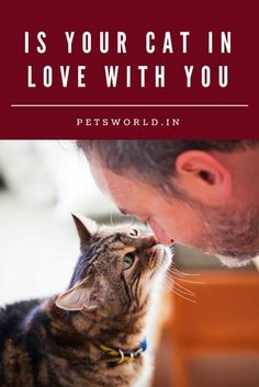 Is your Cat in Love with you? #petsworld #cats #catholic #caturday #catsarelove