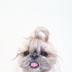 top knot + pup