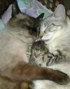 We are family...#kitty love!