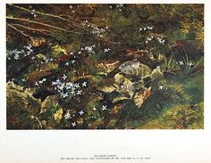 A full catalog of Andrew Wyeth prints and reproductions available at Chadds Ford Gallery Andrew Wyeth Prints, Andrew Wyeth Paintings, Andrew Wyeth Art, Jamie Wyeth, Chadds Ford, Amazing Paintings, Dry Brushing, Artist Painting, American Artists