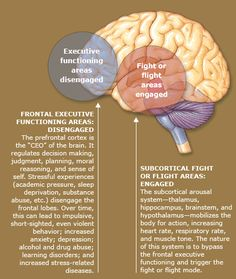 Functions of the brain - Stress& Anxiety affects the brain more than people realize.