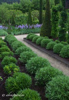 Nel mese di maggio ho visitato un giardino provenzale immerso tra i vigneti e gli uliveti della campagna della Vaucluse. Di pertinenza di un'antica bastide voluta nel 1575 da M.Joanis, segretario d...