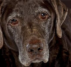 ♥ beautiful old soul...would love to hug this dog! LOVE