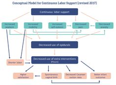 Conceptual Model Doulas (revised 2017) | Evidence Based Birth®