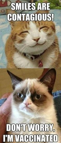 Grumpy cat :(