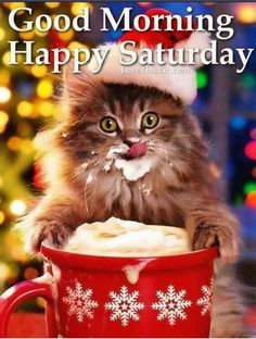 Christmas Kitten - December 2015 - We Love Cats and Kittens Christmas Kitten, Christmas Animals, Christmas Humor, Merry Christmas, Christmas Coffee, Christmas Time, Christmas Morning, Christmas Wishes, Naughty Christmas