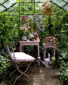 Little greenhouse.