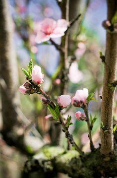 Ostara - Spring Equinox - Renewal