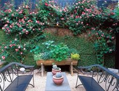 Climbing roses soften the wall and add lots of color to a small space. Small Garden, Seating Area Small Garden Pictures William Morrow Garden Design Washington D. Small Gardens, Outdoor Gardens, Sitting Arrangement, Backyard Plants, Modern Garden Design, Vegetable Garden Design, Garden Pictures, Climbing Roses, Outdoor Decor