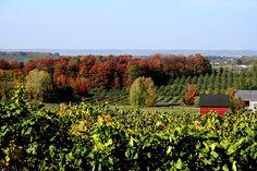 Leelanau Peninsula Wineries, Michigan