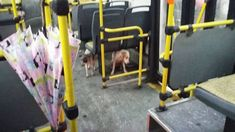 Bus Driver Lets Stray Dogs Ride Along During A Storm