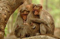Hug A Friend Day: 38 Cute Animals Hugging