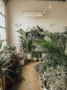 Niche Urban Garden Supply Boston Plants Ma In Greenhouses Unique Places To Go