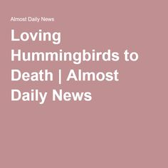 Loving Hummingbirds to Death | Almost Daily News