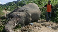 Petition · Carrefour, stop selling palm oil & carcinogenic food. Arrêtez de vendre l'huile de palme et tous les produits chimique cancérigène dans la nourriture (E1422, E330, E202, E260, E270 . . .) · Change.org