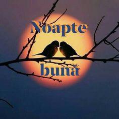 Good Night Babe, Optimism, Spiritual Quotes, Cami, Spirituality, Fictional Characters, Spirit Quotes, Spirituality Quotes, Spiritual