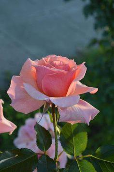 عــاشــق الزهــور والورود - Google+