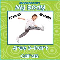 Free Montessori Inspired 3 Part Cards My Body in English and in French