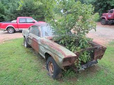 Hitching Post: 1967 Shelby GT500