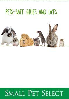 Small Pet Carrier, Pet Ferret, Exercise Wheel, Gerbil, Pet Safe, Pet Carriers, Guinea Pigs, Fun Facts, Chinchillas