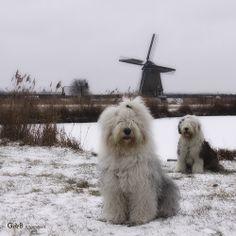 just dutch...ft Rhea & Lisa - #RheaenLisa