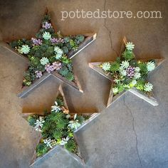 Star shaped succulent wall planters.