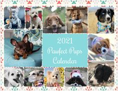 Dog Calendar, 12 Month Calendar, Mimi Boutique, Pet Portraits, One Pic, Dogs And Puppies, Cute Dogs, Terrier, Cover Size