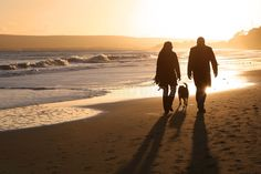 Silhouettes on the Sand. Silhouetted couple walking a dog on the beach , #spon, #Silhouetted, #Sand, #Silhouettes, #couple, #beach #ad
