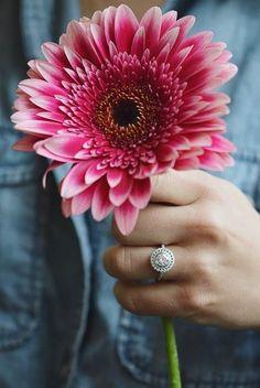 Love is in full bloom.