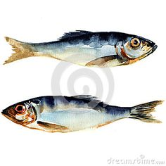 Illustration about Herring fish. watercolor painting on white background. Illustration of aqua, animal, closeup - 38936210 Watercolor Ocean, Watercolor Animals, Watercolor Paintings, Fish Paintings, Watercolours, Art And Illustration, Fish Artwork, Jellyfish Art, Landscape Art Quilts