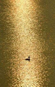 #gold lake