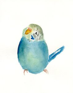 BUDGIE by DIMDI Original watercolor painting 8X10inchxxxxAll the animals that you wantxxxx